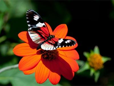 мотылек на цветке