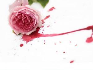 роза, кровь