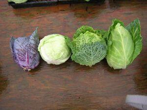 4 вида капусты