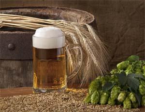 пиво, хмель