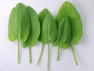 листья щавеля