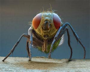 голова мухи