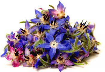 цветы бораго