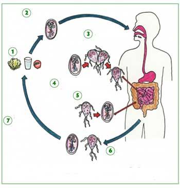 Как происходит инфицирование?
