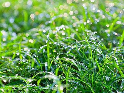 трава в росе