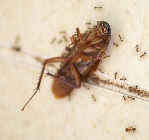 борьба с тараканами и муравьями