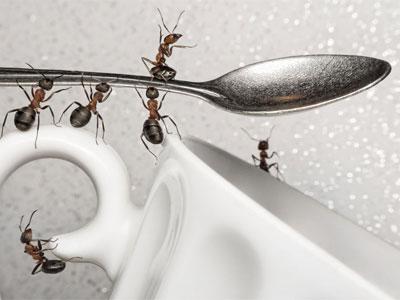 муравьи на посуде