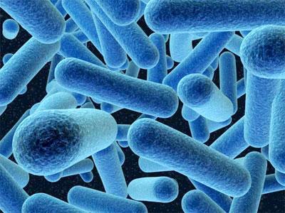 бактерии, палочки