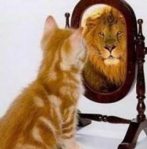котенок перед зеркалом