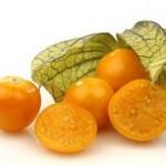 зеленые плоды физалиса