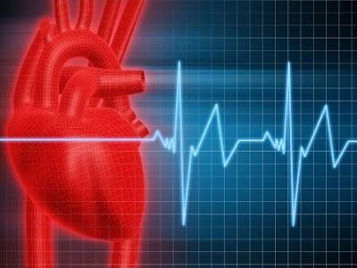 сердце, график
