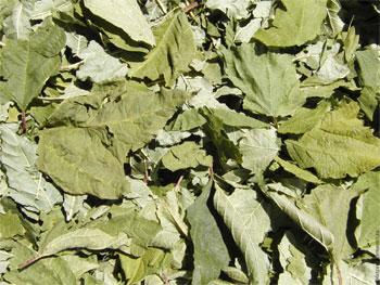 лист калины