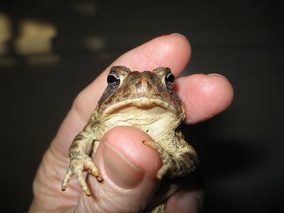 лягушка в руке
