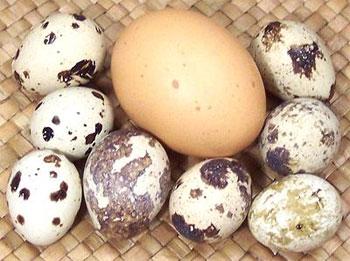 сравнение куриного яйца с перепелиными