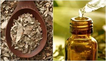 сухой лист эвкалипта и масло
