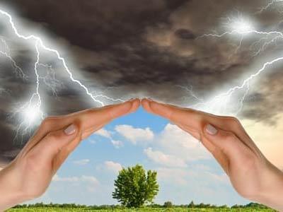 руки защищают дерево