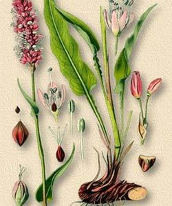 части растения