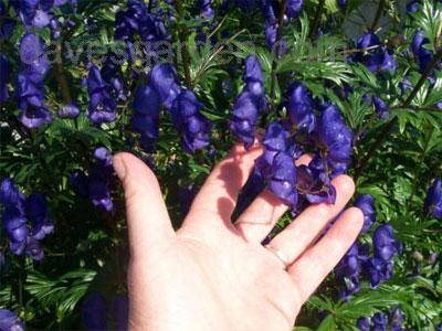 цветы в руке