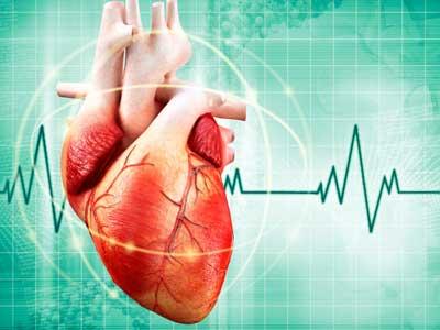 сердце, пульс, кардиограмма
