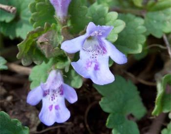 цветы будры