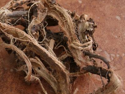 сушеный корень