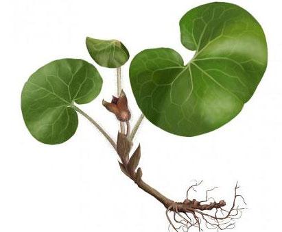 растение с корнем